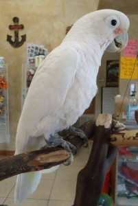 Our Birds Tropic Island Bird And Pet Supply