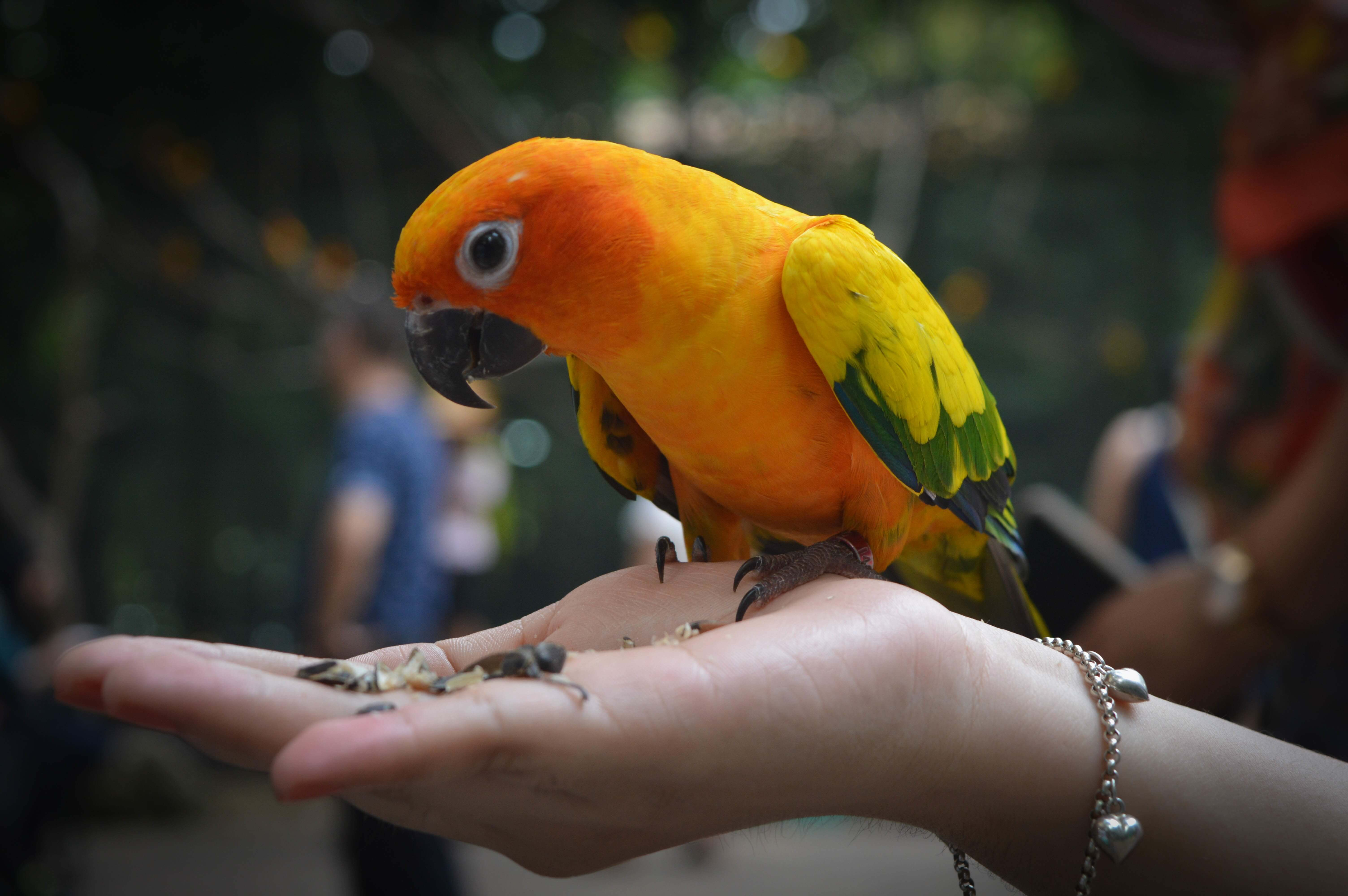 Discount Bird Toys : Tropic island bird and supply we breed buy sell and trade